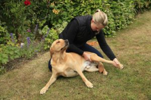 Canine Osteopathy