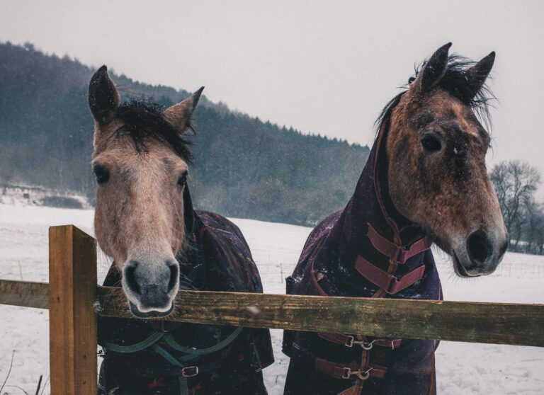 Winter equine health east sussex osteopaths